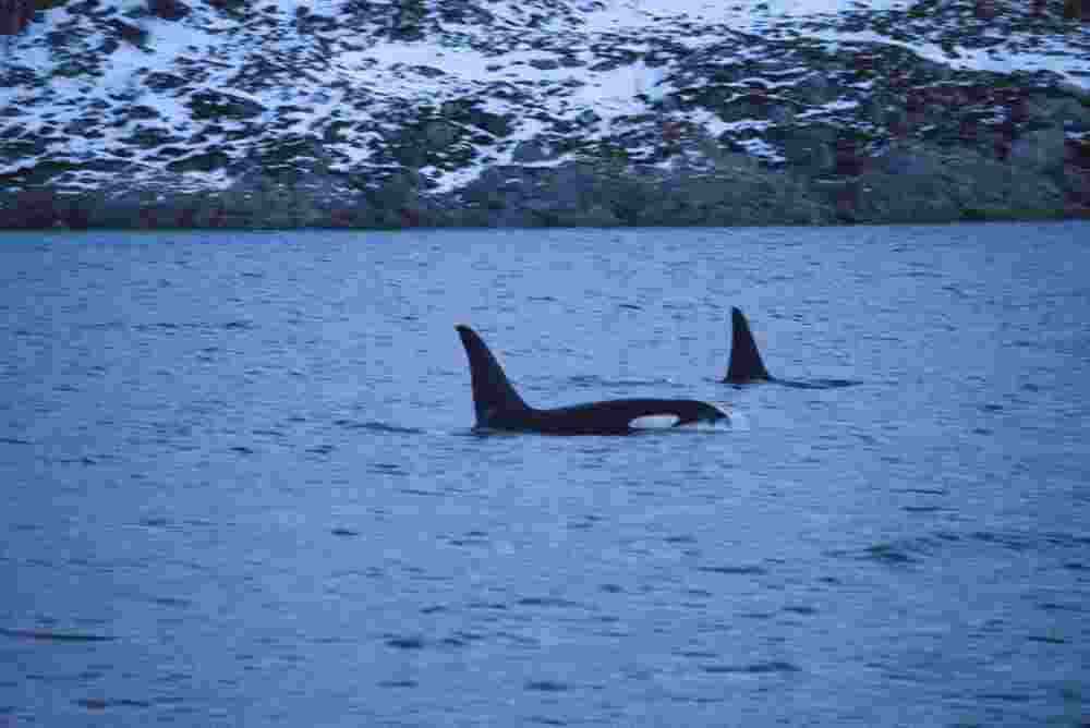 Norwegen Orka